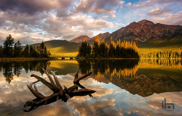Picture forest, light, mountains, lake, morning, Canada, Albert, snag, Jasper national Park, Pyramid Lake