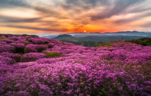 Picture the sun, flowers, mountains, fog, hills, morning, Korea