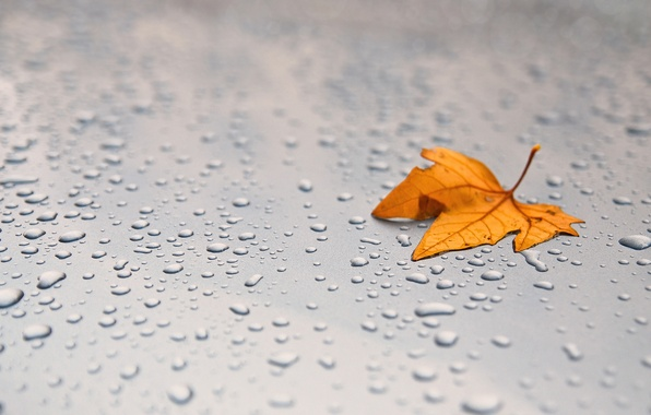 Picture machine, autumn, leaves, drops, squirt, metal, foliage, leaf, drop, leaves, leaf, sheets, widescreen Wallpaper, macro …