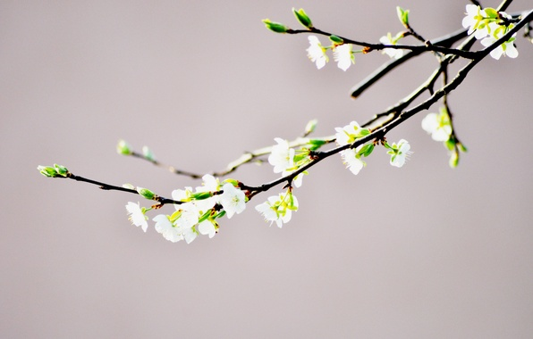 Picture flower, branch, spring, Bud