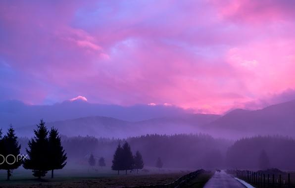 Picture animals, nature, fog, the evening, morning, haze, deer