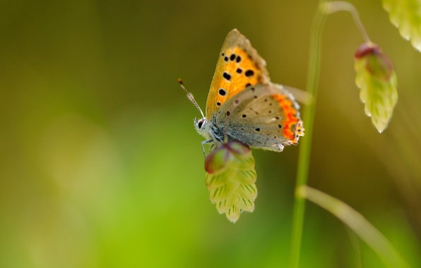 Picture macro, butterfly, plant, wings, insect, speck
