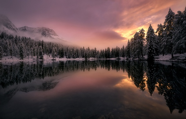 Picture winter, forest, snow, trees, clouds, fog, lake, reflection, spruce, Mountains, Italy