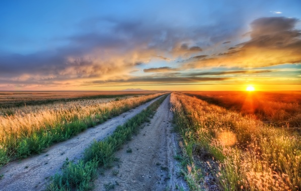 Picture road, greens, field, the sun, landscape, flowers, nature, background, widescreen, Wallpaper, vegetation, field, wallpaper, path, …