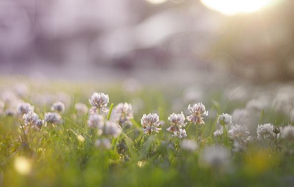 Picture grass, flowers, nature, clover, porridge
