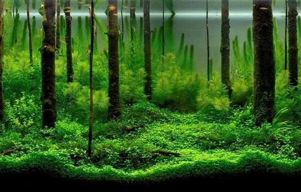 Picture fish, algae, aquarium