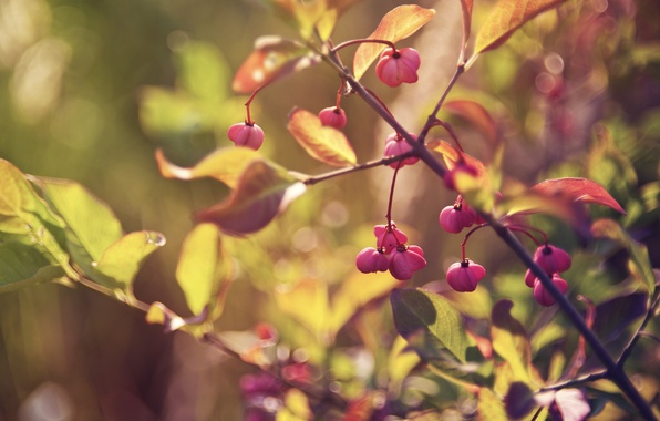 Picture autumn, leaves, macro, light, branches, sheet, glare, berries, branch, foliage, branch, blur