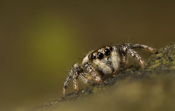 Picture background, spider, jumper, jumper