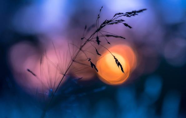 Picture summer, grass, the sun, macro, the evening, bokeh