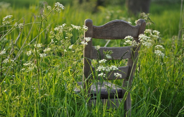 Picture summer, grass, chair