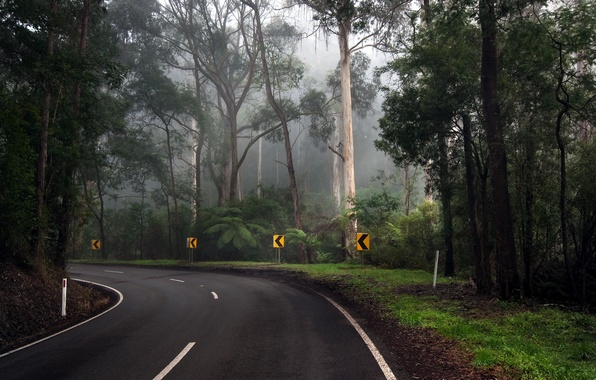 Picture road, forest, trees, turn