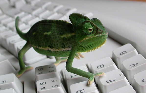 Picture chameleon, keyboard