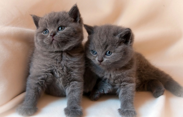 Picture kittens, kids, twins