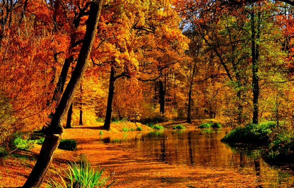 Picture autumn, leaves, water, the sun, trees, pond, Park, yellow