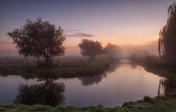 Picture trees, landscape, bridge, fog, surface, river, morning, oragene, IVA
