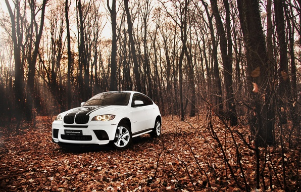 Picture forest, leaves, Autumn, White, BMW, BMW, SUV, white, tuning, E72