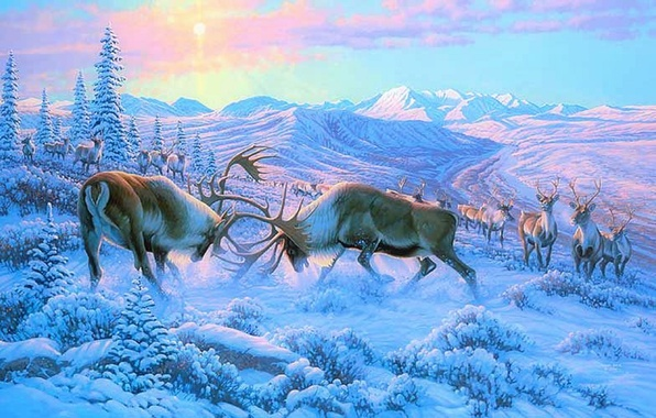 Wallpaper Winter Forest Animals Snow Mountains Fight