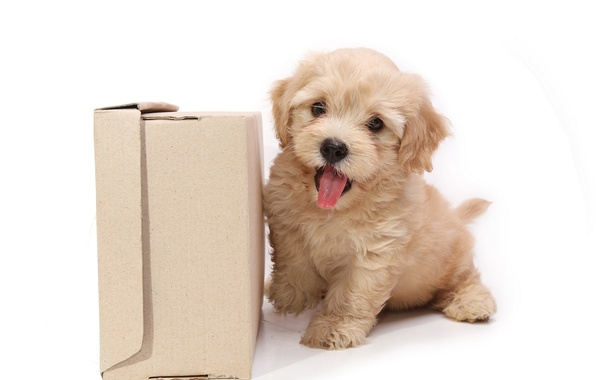 Picture box, dog, puppy