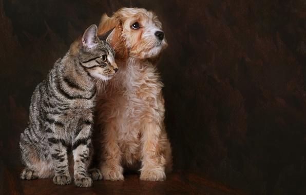 Picture cat, dog, friends