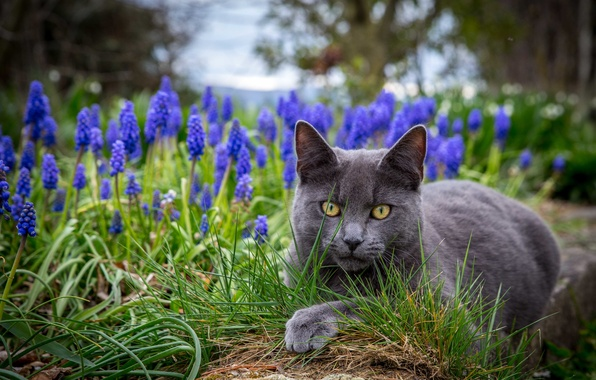 Picture grass, eyes, cat, flowers