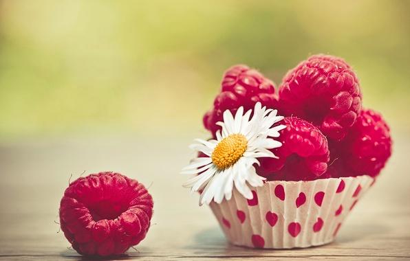 Picture flower, macro, berries, raspberry, Daisy