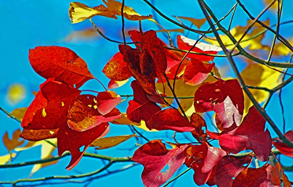 Picture autumn, the sky, leaves, macro, branch