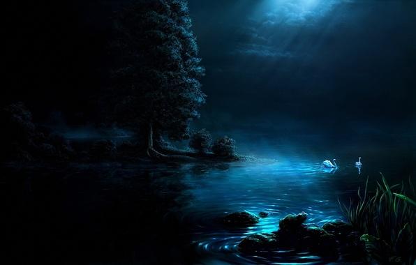 Picture night, lake, Swan, Fel-X