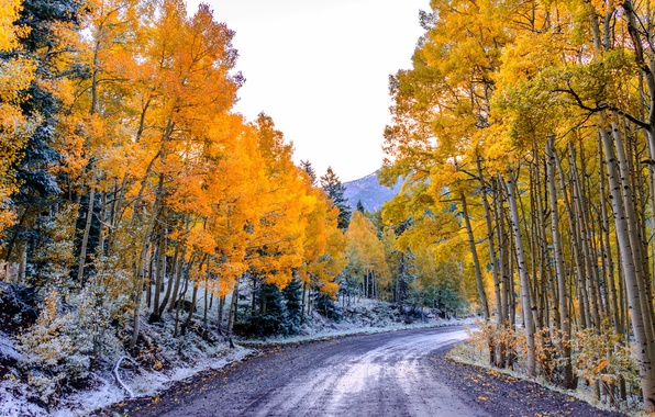 Picture road, autumn, forest, the sky, leaves, trees, mountains, Colorado, USA, aspen, Aspen
