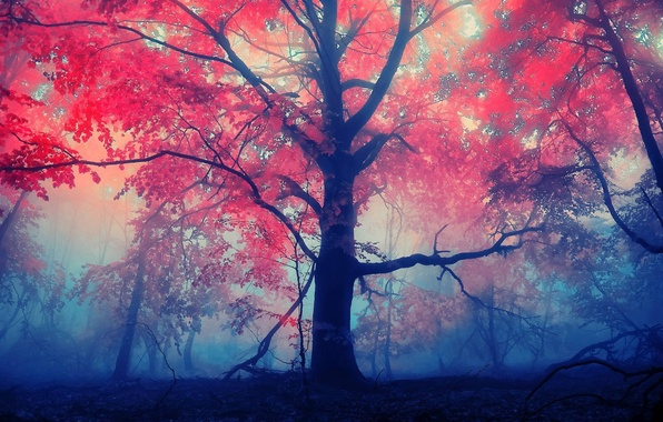 Picture forest, leaves, red, fog, tree