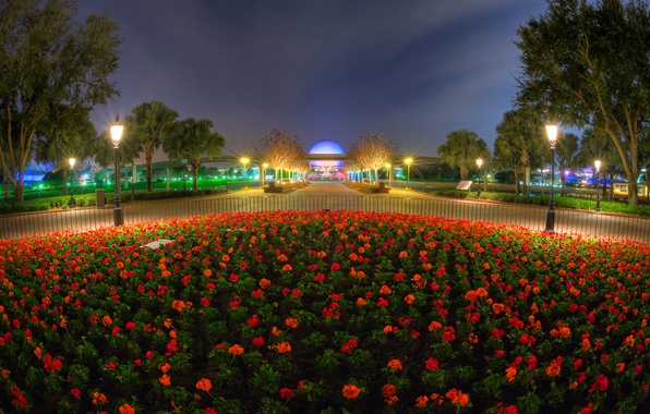 Picture the sky, clouds, flowers, night, lights, Park, lights, flowerbed
