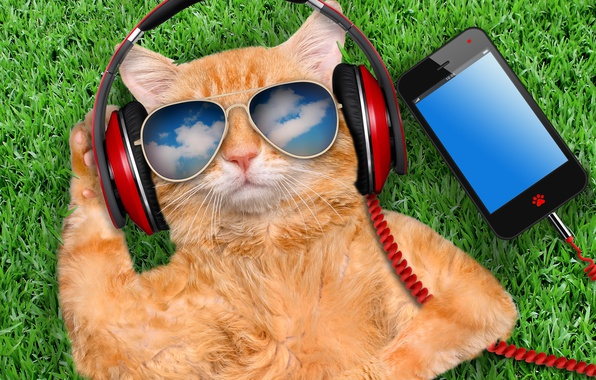 Picture grass, cat, glasses, smart phone