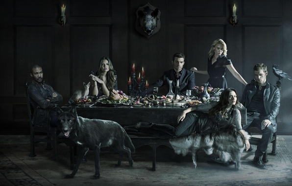 Picture The Vampire Diaries, crow, raven, cat, wolf, Vampire, Joseph Morgan, Phoebe Tonkin, 2014, pig, Daniel ...