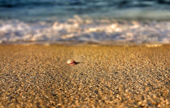 Picture sand, sea, beach, summer, water, macro, nature, river, background, widescreen, Wallpaper, blur, shell, wallpaper, sea, …