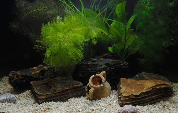Picture grass, aquarium, shell, pebbles, antique