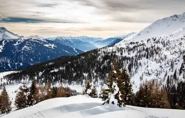 Picture winter, snow, trees, mountains, tree, slope, Alps, Italy, tree, Italy, Italia, Alps, Alpi