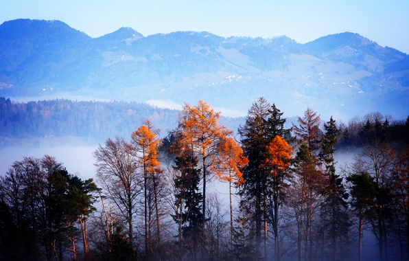 Picture autumn, forest, trees, mountains, fog