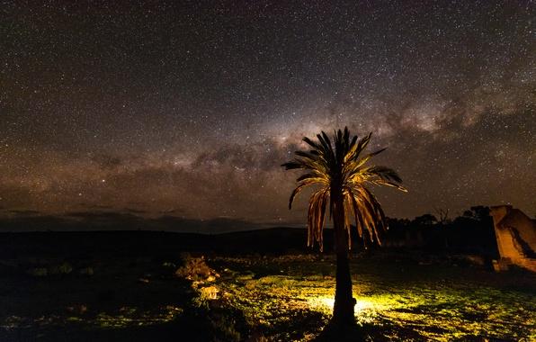 Picture stars, night, nature, Palma, tree, the milky way