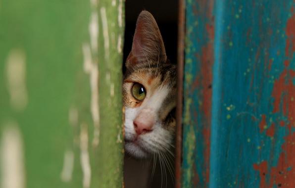 Picture cat, Koshak, Tomcat, the gap