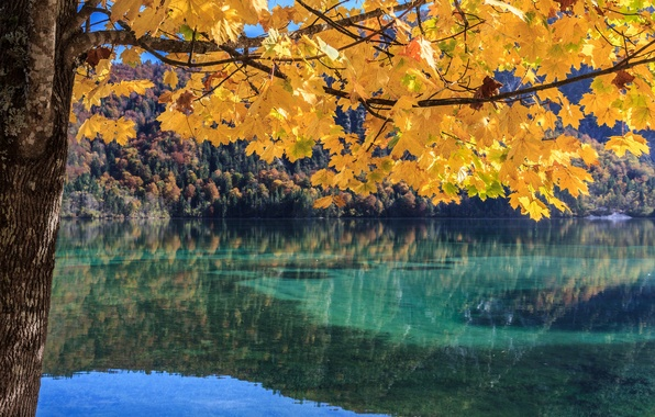 Picture autumn, forest, leaves, lake, tree, branch