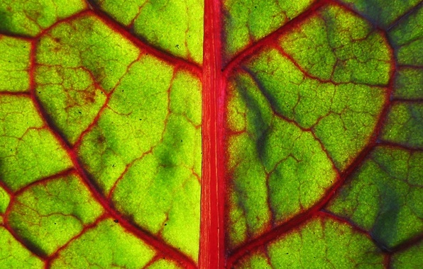 Picture greens, macro, sheet