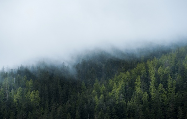 Picture forest, fog, windows, windows 10