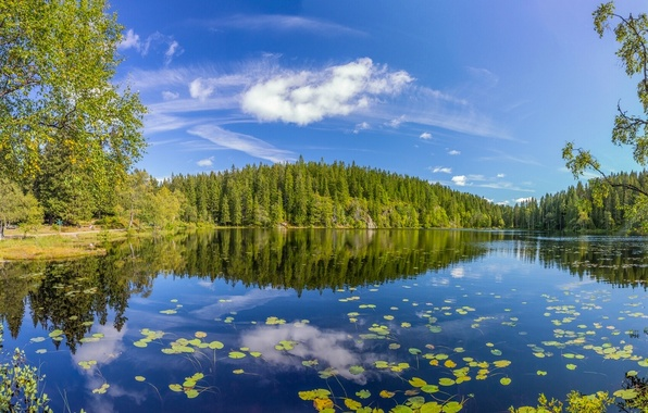 Picture forest, summer, trees, lake, reflection, Norway, Norway, Oslo County, Skjennungen Lake