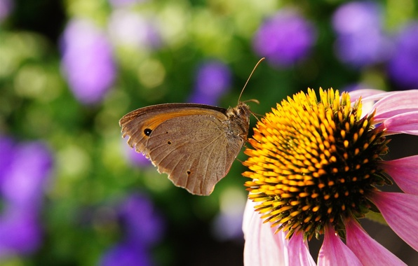 Picture BUTTERFLY, FLOWER, INSECT, PISTIL, STAMENS