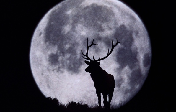 Picture the moon, deer, silhouette, horns, black and white