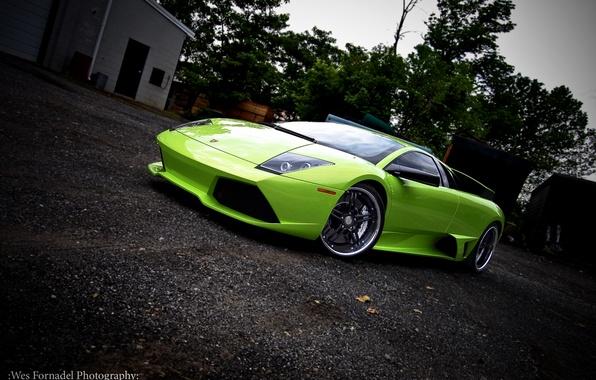 Picture green, lamborghini, drives, Lamborghini, murcielago, 360 forged, green, Miami, Murcielago