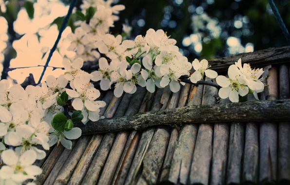 Picture macro, cherry, glare, tree, branch, spring, sticks, blur, white, bark, flowering