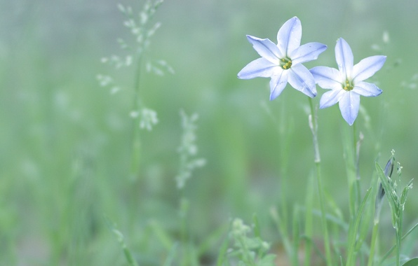 Picture greens, grass, flowers, nature, green, glade, tenderness, color, plants, spring, petals, light, blue, white