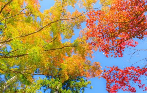 Photo wallpaper autumn, the sky, leaves, trees, the crimson