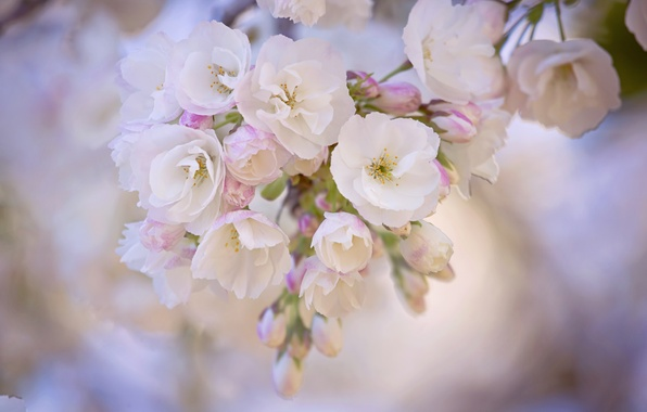 Picture tenderness, branch, spring, flowering