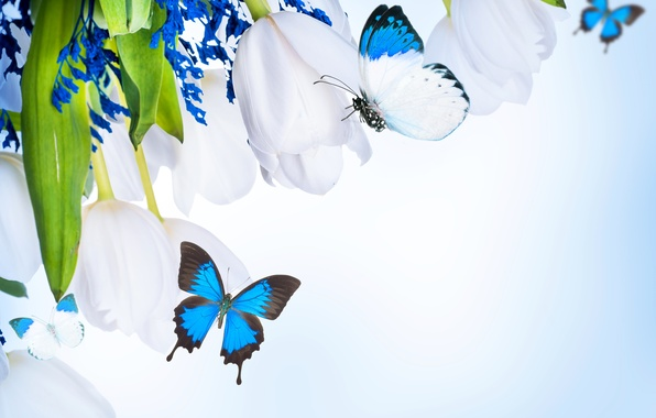 Picture butterfly, flowers, bouquet, flowers, bouquet, butterflies, white tulips, white tulips